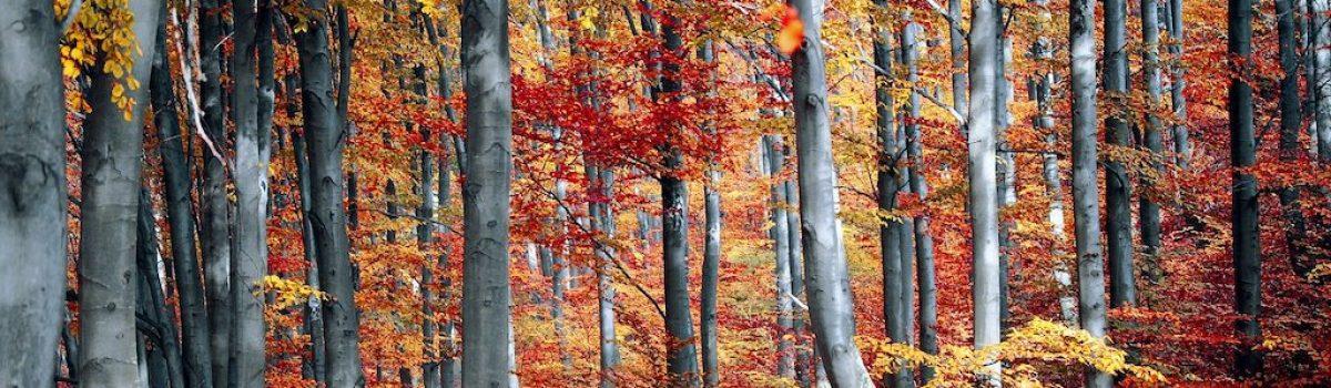 Up North Minnesota Leaf-Peeping Tips