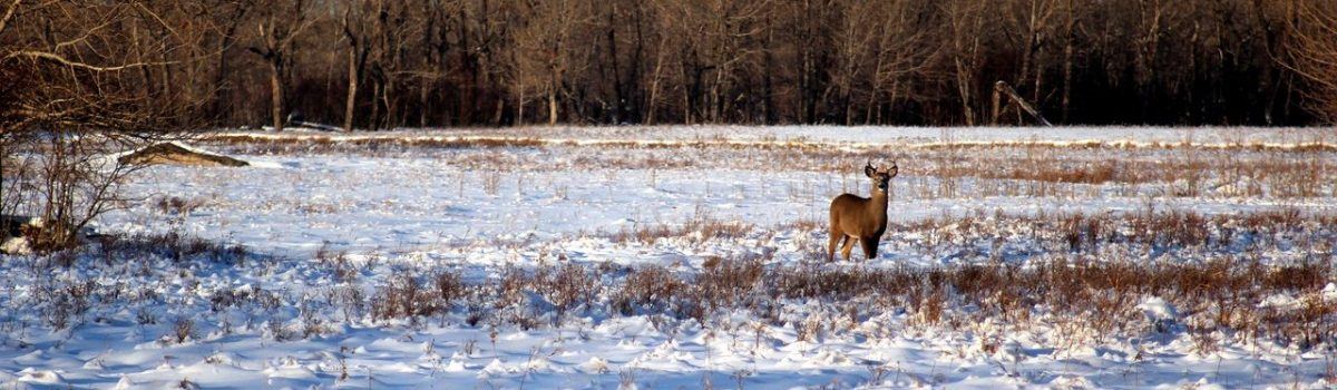 Interesting Minnesota Deer Hunting Facts